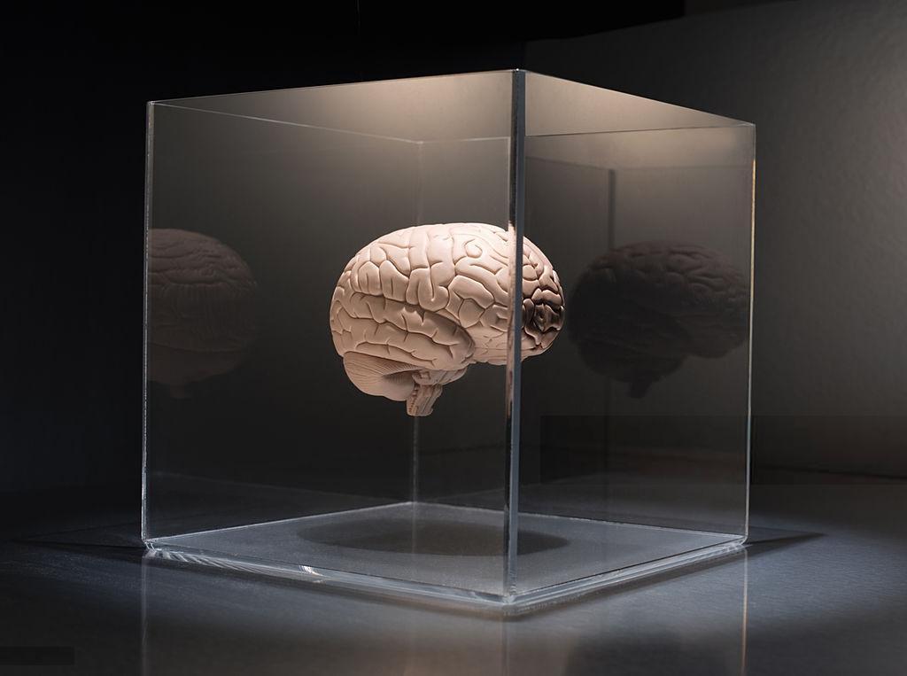 مغز و یادگیری